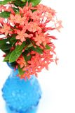 The blue vase. S with red flowers were isolated on white background Stock Image