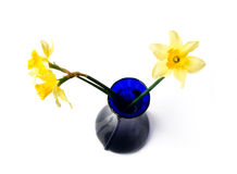 Free Blue Vase With Yellow Narcissi Royalty Free Stock Photography - 8754787