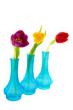 Blue vases with colorful tulips Royalty Free Stock Photo
