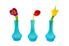 Blue vases with colorful tulips Royalty Free Stock Images