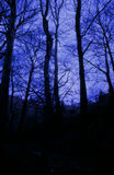 Blue velvet. Trees, Pilion, Greece royalty free stock images