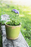 Blue verbena flower in green pot on wooden beam Stock Photography