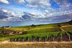 Blue Vineyards. Vineyards view from Sancerre in France stock photo