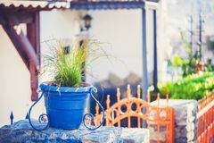 Blue vintage flower pot with green grass Royalty Free Stock Photo