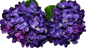 Blue, Violet, Flower, Purple Stock Photos
