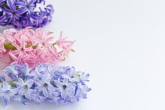 Blue, violet and pink hyacinths isolated on white background. Spring or March 8 poscard concept Royalty Free Stock Photography