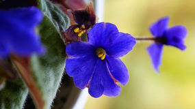 Blue violet Royalty Free Stock Photos