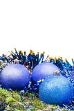 Blue and violet Xmas balls on green spruce branch Royalty Free Stock Images