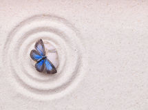 A blue vivid butterfly on a zen stone with circle patterns Royalty Free Stock Photos