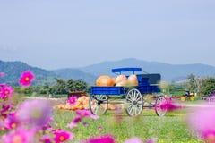 Blue wagon full of pumpkins Royalty Free Stock Photos