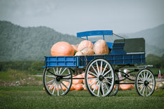 Blue wagon full of pumpkins Stock Photography