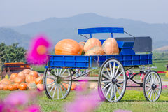 Blue wagon full of pumpkins Stock Images