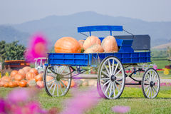 Blue wagon full of pumpkins Stock Photography