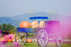 Blue wagon full of pumpkins Stock Photo