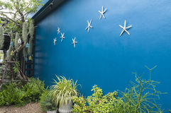 Blue wall background with starfish in the garden Royalty Free Stock Photo