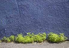 Blue wall Stock Photos