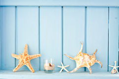 Blue wall decoration with shellfish Royalty Free Stock Photos