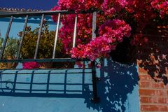 Flowers and blue wall. Blue wall. Flowers and blue wall. Juzcar village, Malaga province. Costa del Sol, Andalusia, Spain Royalty Free Stock Images