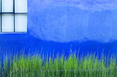 Blue Wall With Greens Stock Photos