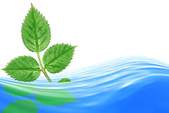 Blue water. And green leaves over white background. Render Stock Photo