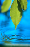 Blue water. Water dropping from leaf into blue pool