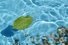 Blue water. Transparent blue water with floating leaf Royalty Free Stock Image