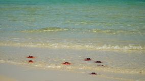 Blue water on the beach of the island. Slow mothion. Beautiful big red starfishes lie on the ocean coast. Slow-motion. On this video you can see as on the white stock video footage