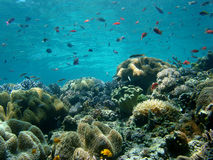 Blue Water, Coral Reef. South East Asia's Coral Reefs are some of the Best in the World, clear blue water stock photo