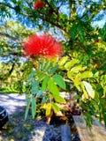 Art flower stock photography
