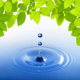 Blue water drop on leaves Royalty Free Stock Photo