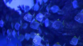 Blue water fish stock video footage