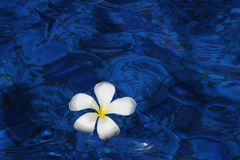 Blue, Water, Flower, Petal stock photo