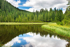 Blue water in a forest lake Royalty Free Stock Photos