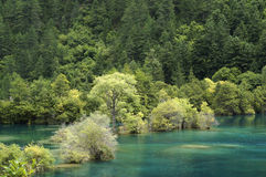 Blue water and green trees Royalty Free Stock Images