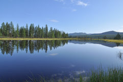 Blue water of the lake under the blue sky framed stems sedges. Stock Photography