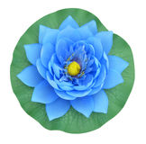 Blue water lily on white background Royalty Free Stock Photography