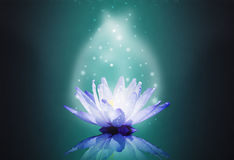 Blue water lotus on magic light Royalty Free Stock Photo