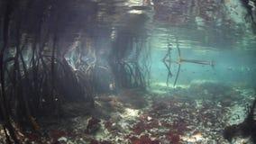 Blue Water Mangrove in Raja Ampat stock footage