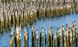Blue Water Through Old Wood Pilings Royalty Free Stock Photos