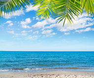 Blue water and palm Royalty Free Stock Photo