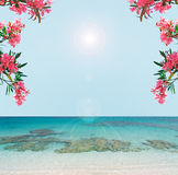 Blue water and pink flowers Stock Image