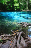 Blue water in the pool. Blue water in the pool and in the forest at Thailand Royalty Free Stock Photos