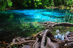 Blue water in the pool. Blue water in the pool and in the forest at Thailand Royalty Free Stock Images