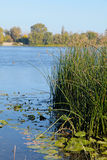 Blue water and reeds on Dnieper River in Kiev Royalty Free Stock Image