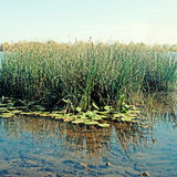 Blue water and reeds on Dnieper River in Kiev Stock Photography