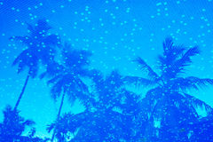 Blue water of resort swimming pool with palm trees reflection. View from above through the water Royalty Free Stock Photos