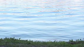 Blue water with ripple near shore of river stock video
