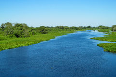 Blue water River Uruguay in Brazil. Blue water river, beautiful landscape. River Uruguay in Brazil. Tropical greenery plants floating in blue water river and stock photo