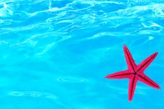 Blue water and starfish Royalty Free Stock Images