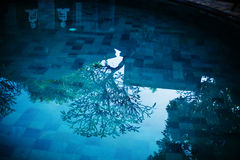 Blue water in swimming pool and little budha and tree. Reflection of tree, roofs and statues in blue clear water of swimming pool Stock Photo